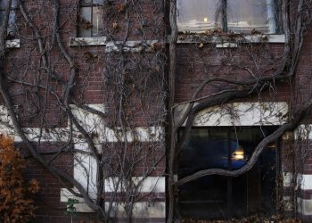 Tree branches and roots growing along the brick wall outside CSI Annex. Photo credit: Sammy Tangir.